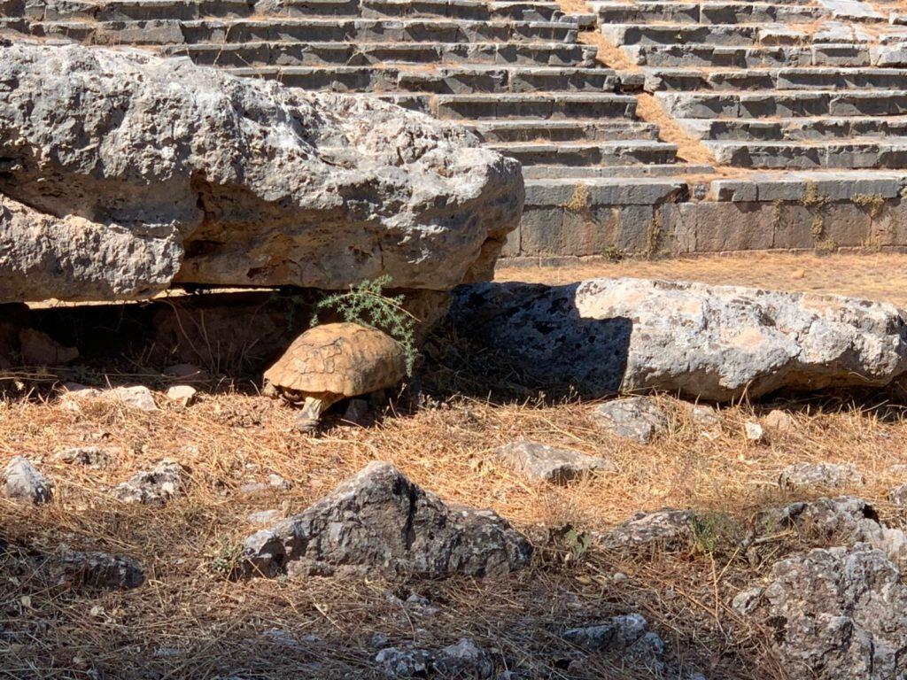 ギリシャの世界遺産デルフィ神殿|行き方や見どころおすすめの服装